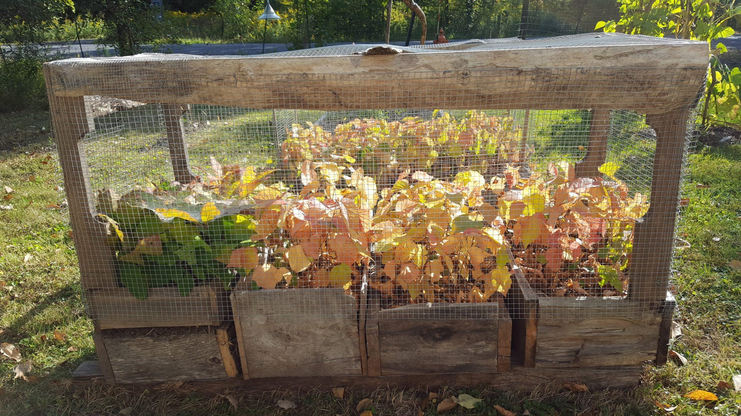 Autumn equinox view of air prune beds growing hazel and red oak seedlings